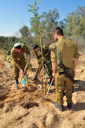 negev: WESTERN NEGEV - JAN 20:Israeli soldiers plants tree in Tu Bishvat on January 20 2011 in the Western Negev Israel.Its Jewish holiday and agricultural festival, marking the emergence of spring.