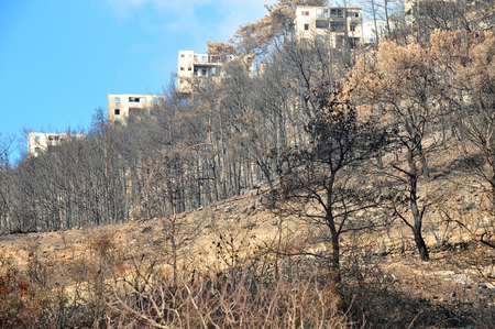 kibbutz: MT CARMEL, ISRAEL - DECEMBER 25: The damage left in Kibbutz Beit Oren after the Great Fire in Mt Carmel disaster on December 02 2010. Editorial