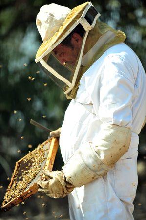 kibbutz: ASHKELON - SEPTEMBER 02: An Israeli beekeeper is collecting honey for Rosh Hashana on September 02 2010 in Kibbutz Yad Mordechai, Israel