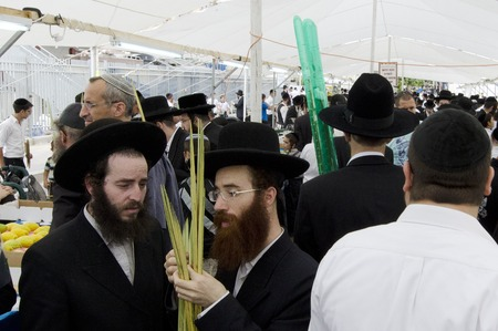 sukkoth festival: ASHDOD - OCTOBER 12 : Jewish ultra-orthodox  people inspect Lulav at a four species market for the Jewish holiday of Sukkot on October 12 2011 in Ashdod,Israel.