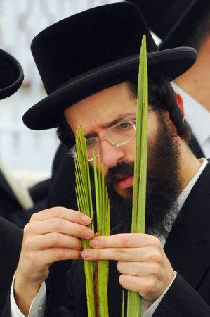 sukkoth festival: ASHDOD - OCTOBER 12 : Jewish ultra-orthodox  man inspect Lulav at a four species market for the Jewish holiday of Sukkot on October 12 2011 in Ashdod, Israel. Editorial