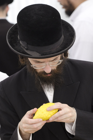 tabernacles: ASHDOD - OCTOBER 12 : Jewish ultra-orthodox  man inspect Etrog at a four species market for the Jewish holiday of Sukkot on October 12 2011 in Ashdod,Israel.
