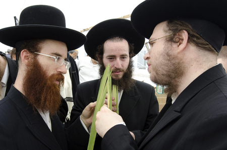 succos: ASHDOD - OCTOBER 12 : Jewish ultra-orthodox  people inspect Lulav at a four species market for the Jewish holiday of Sukkot on October 12 2011 in Ashdod,Israel.