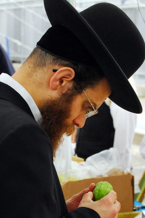 succos: ASHDOD - OCTOBER 12 : Jewish ultra-orthodox  man inspect Etrog at a four species market for the Jewish holiday of Sukkot on October 12 2011 in Ashdod,Israel.