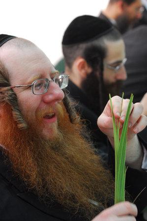 ashdod: ASHDOD - OCTOBER 12: Jewish ultra-orthodox  man inspect Lulav at a four species market for the Jewish holiday of Sukkot on October 12 2011 in Ashdod,Israel.