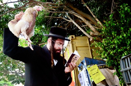 jewish community: ASHDOD - SEPTEMBER 15 : Ultra orthodox Jewish man waves a chicken over himself during the Kaparot ceremony held on September 15 2010 in Ashdod Israel. Editorial