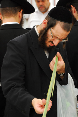tabernacles: ASHDOD - OCTOBER 12 : Jewish ultra-orthodox man inspect Lulav at a four species market for the Jewish holiday of Sukkot on October 12 2011 in Ashdod,Israel.