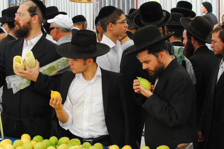 tabernacles: ASHDOD - OCTOBER 12 : Jewish ultra-orthodox people inspect Etrogs at a four species market for the Jewish holiday of Sukkot on October 12 2011 in Ashdod,Israel. Editorial