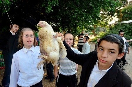 jewish community: ASHDOD - SEPTEMBER 15 :Ultra orthodox Jewish  boy waves a chicken over his head during the Kaparot ceremony held on September 15 2010 in Ashdod Israel. Editorial