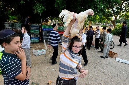 ashdod: ASHDOD - SEPTEMBER 15 :Ultra orthodox Jewish  boy waves a chicken over his head during the Kaparot ceremony held on September 15 2010 in Ashdod Israel. Editorial