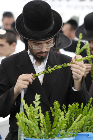 tabernacles: ASHDOD - OCTOBER 12 : Jewish ultra-orthodox man inspect Aravah at a four species market for the Jewish holiday of Sukkot on October 12 2011 in Ashdod,Israel. Editorial