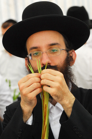 succos: ASHDOD - OCTOBER 12 : Jewish ultra-orthodox man inspect Lulav at a four species market for the Jewish holiday of Sukkot on October 12 2011 in Ashdod,Israel.