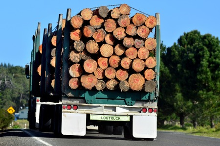 logging truck: KAITAIA, NZ - JULY 18:Stacked wooden logs, tree trunks on a logging truck on July 18 2012.Its New Zealand third largest export earner with international sales in excess of 4 billion.