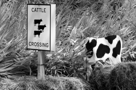 roadside: Cattle crossing sign on a country roadside. (BW)