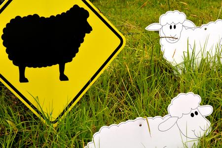 oveja negra: Las ovejas Negro en el reba�o. Concepto Social Foto de archivo