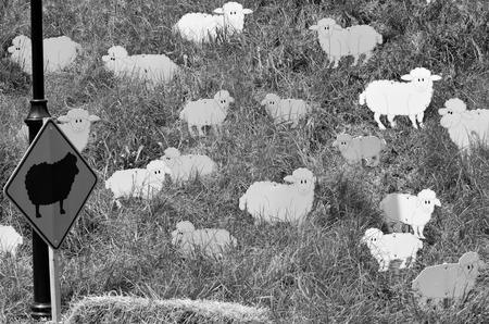 oveja negra: El Negro ovejas en el reba�o. Concepto Social (BW)