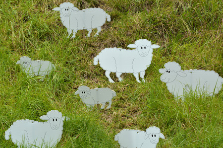 medow: Flock of sheep in the medow.