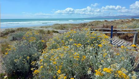 the east coast: New Briton Beach on the east coast of the south island of New Zealand