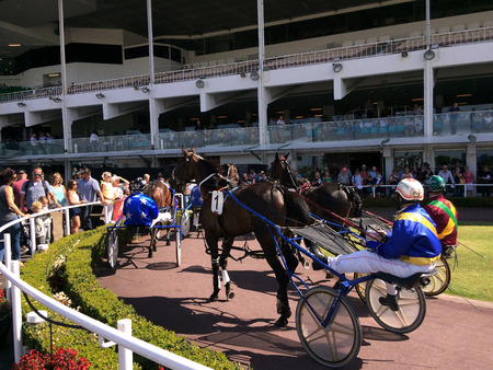 alexandra: AUCKLAND - DE 31 2015:Harness racing in Alexandra Park Raceway in Auckland New Zealand.Chariot racing developed by the ancient Assyrian civilisation about  2000 BC