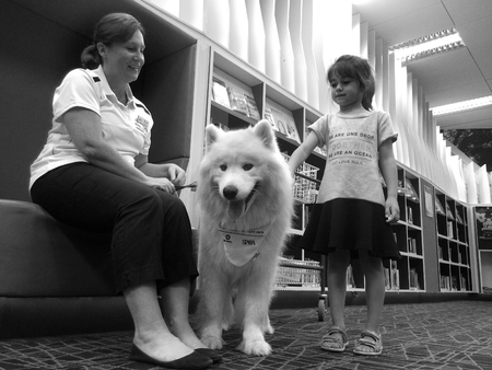 show dog: AUCKLAND - JAN 09 2016:Child (Talya Ben-Ari age 05) on SPCA dog safety training.Recent USA survey show Dog bites send nearly 368,000 victims to hospital emergency departments per year (1,008 per day) Editorial