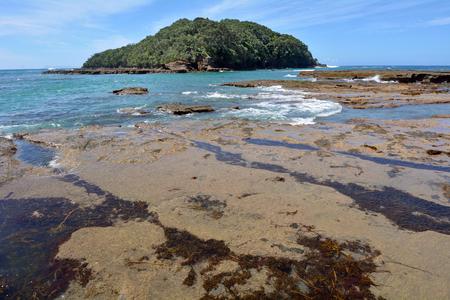 the east coast: Landscape of Goat Island beach located in the East Coast of the North Island of New Zealand.