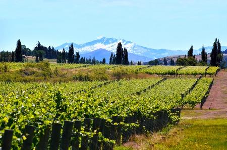 Paisaje de viñedos en el valle de Gibbston en Otago, Nueva Zelanda. Foto de archivo