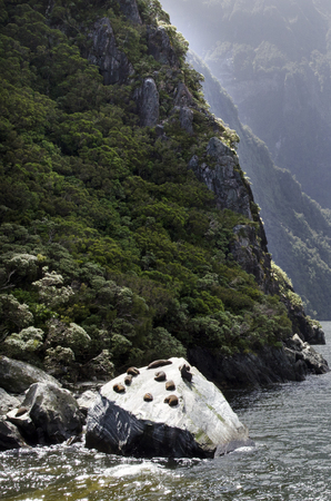 milford: Seals colony in Milford Sound, New Zealand Stock Photo