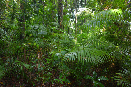 tribulation: Daintree National Park near Cape Tribulation in the tropical north of Queensland, Australia Stock Photo