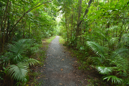 tribulation: Empty path in Daintree National Park near Cape Tribulation in the tropical north of Queensland, Australia