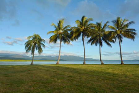 port douglas: Row of palm trees on the coast of Port Douglas in the tropical north of  Queensland,  Australia