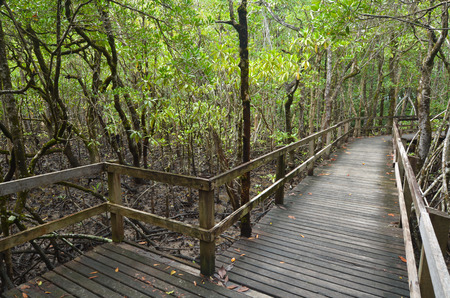 tribulation: Empty wooden path in Daintree National Park near Cape Tribulation in the tropical north of Queensland, Australia Stock Photo
