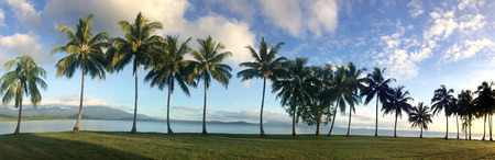 port douglas: Panoramic landscape view of a row of palm trees on the coast of Port Douglas in the tropical north of  Queensland,  Australia Stock Photo