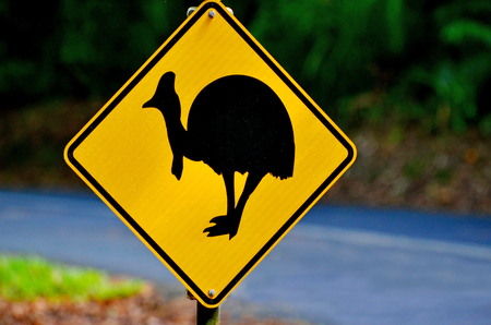 ratite: Cassowary warning sign on a road in Daintree National Park in the tropical north of Queensland, Australia. Cassowary is endangered flightless bird species needs nature conservation and protectionon.