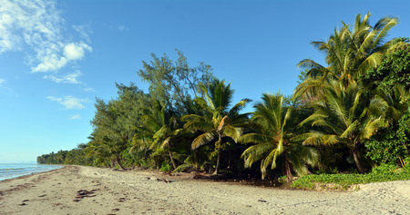 douglas: Panoramic landscape of Four Mile Beach in Port Douglas at the tropical north of  Queensland,  Australia