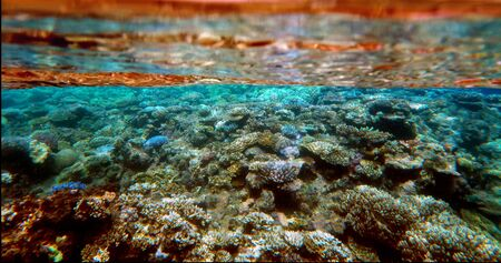 barrier: Underwater Marine life at the Great Barrier Reef in Queensland Australia