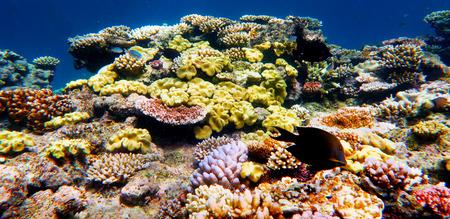 Het mariene leven op het Great Barrier Reef Queensland Australië