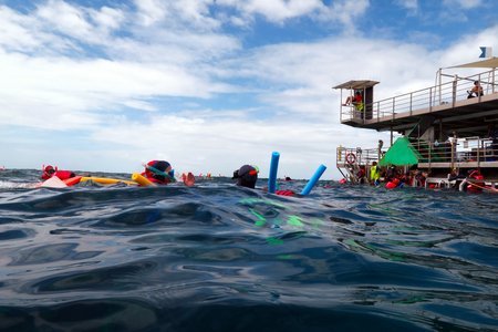 barrier reef: QUEENSLAND, AUS - APR 16 2016:People snorkeling and dive from a platform in the Great Barrier Reef in Queensland, Australia. Over 1500 different species of fish live in the Great Barrier Reef. Editorial
