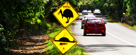 ratite: QUEENSLAND, AUS - QPR 20 2016:Cassowary warning sign on a road in Daintree National Park. Cassowary is endangered flightless bird species in conservation and protection in Queensland, Australia.