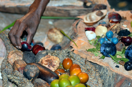 aboriginal woman: Yirrganydji Aboriginal woman hand assorting fruit and seeds food eaten by the indigenous Australian people  from the rainforests of Queensland, Australia. Stock Photo