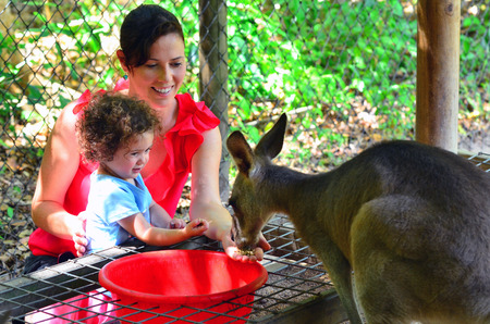 kangaroo mother: Mother and child (girl age 1-2) feed a grey Kangaroo in Queensland Australia. Travel with family concept