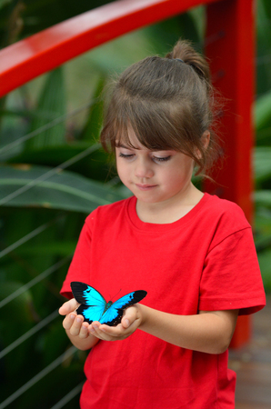 australasia: Little girl holds in her hands a Ulysses Swallowtail (Papilio ulysses) is a large swallowtail butterfly of Australasia.  This butterfly is used as an emblem for Queensland tourism symbol. Stock Photo