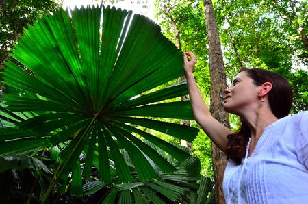 daintree: Young woman touches an Australian fan palm leaf in Daintree National Park in the tropical north of Queensland, Australia