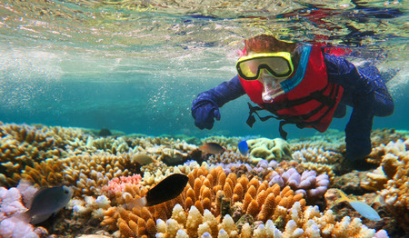 Child (girl age 5-6) snorkeling dive in the Great Barrier Reef in the tropical north of Queensland, Australia