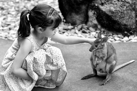 appears: Little child (girl age 5-6) petting a Yellow-footed rock-wallaby in  Queensland, Australia. It appears on the IUCN Red List of Threatened Species .