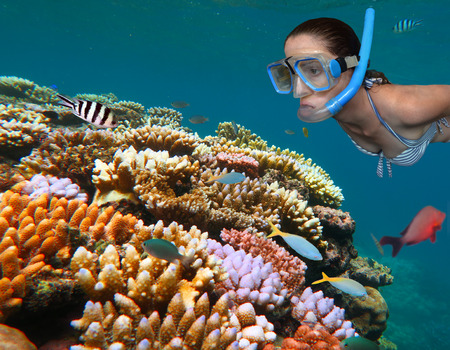 Woman snorkeling dive in the Great Barrier Reef in the tropical north of Queensland, Australia Stock Photo