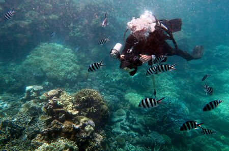 barrier reef: Underwater photographer photographing in the Great Barrier Reef Queensland Australia
