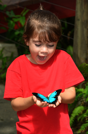 australasia: Surprised little girl holds in her hands a Ulysses Swallowtail (Papilio ulysses) is a large swallowtail butterfly of Australasia.  This butterfly is used as an emblem for Queensland tourism symbol. Stock Photo