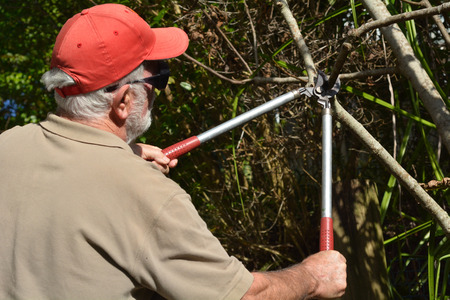 Man use a Tree Pruner to cut a tree branch in a home garden.