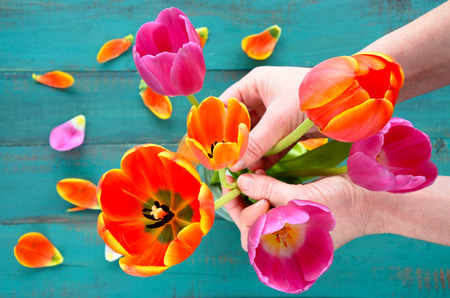 organizing: Flat lay view of woman hands organizing and assorting Tulip flowers bouquet. Women holiday concept. copy space