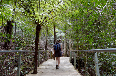 silver fern: Woman walks on a path in the rainforest of Jamison Valley at the Blue Mountains in New South Wales, Australia.